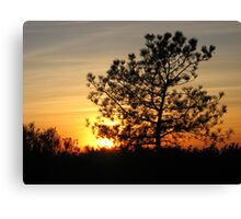 torrey pine sunset Canvas Print