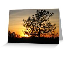 torrey pine sunset Greeting Card
