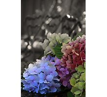 Old Time Flowers Photographic Print