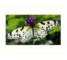 Flutterfly Art Print