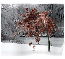 Beauty after a fall icestorm Poster