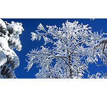 Snow on the Treetops Photographic Print