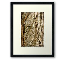 Matted and Plaited Framed Print