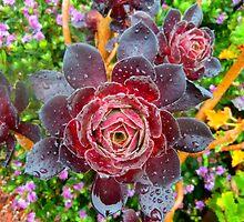 succulent by DMEIERS
