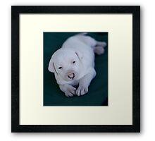 Puppy c Framed Print
