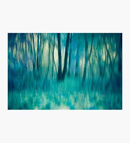 Whispers in The Trees Photographic Print