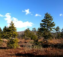 Cranberry Botanical Area by David Miller