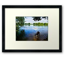 Sorry Master... He flew away! Framed Print