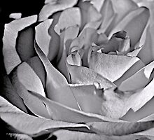 paper rose by Jessica Karran
