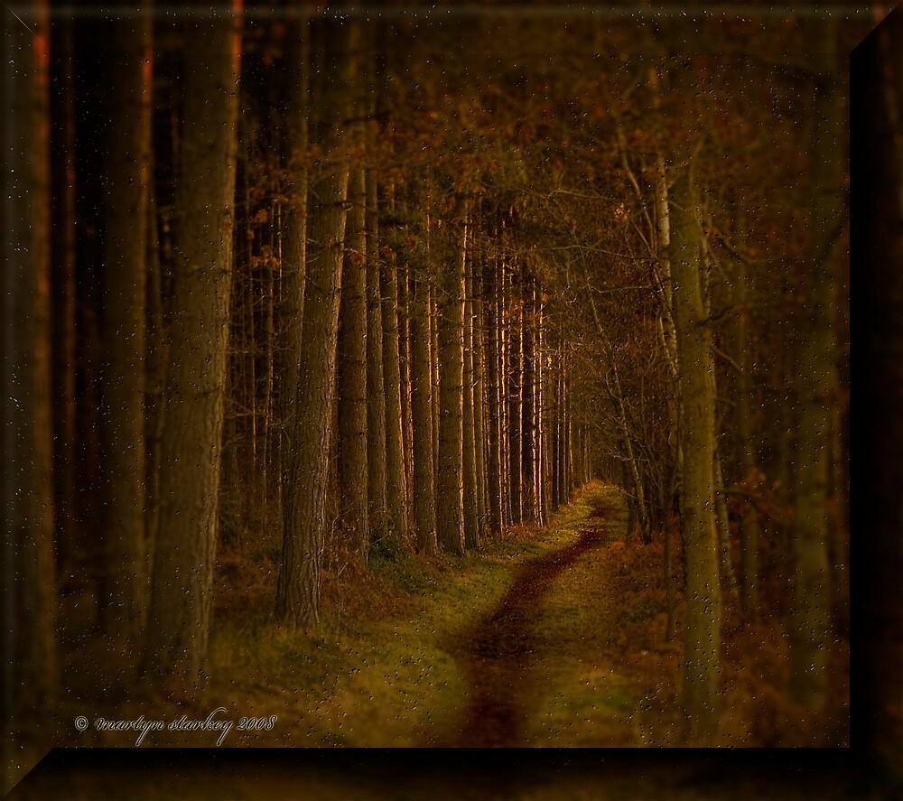Tall Trees by Martyn Starkey