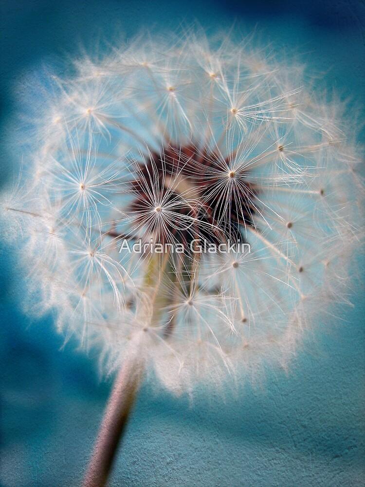 Make a Wish by Adriana Glackin