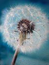 Make a Wish by Adriana Glackin