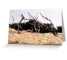 Desert in a middle  Greeting Card