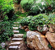 Stone Path Rock Garden by Sarah  Levinson
