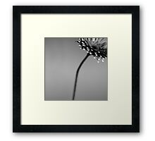 dull and grey Framed Print
