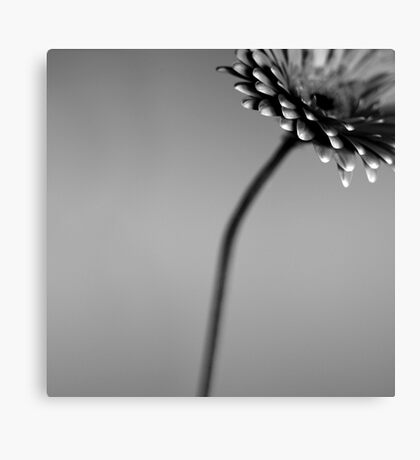 dull and grey Canvas Print