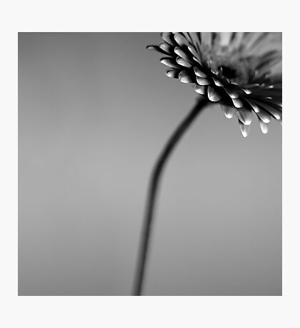 dull and grey Photographic Print