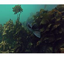 Stalking Rock Fish Photographic Print