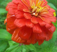 Orange Flower by SandoPhotos