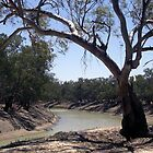 Darling River during Draught by JulieMahony