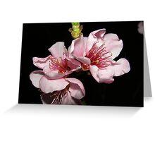 jacks flower Greeting Card