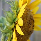side view sunflower by Jeannine de Wet