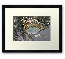 Beach Treasure Framed Print