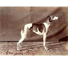 Retro Greyhound Photographic Print