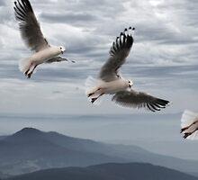 Fly by Harjono Djoyobisono