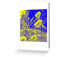 Teasel : Photography by Alys Griffiths Greeting Card