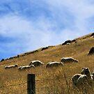 Sheep Fence by kaneko