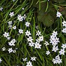 Little purple flowers by jaker5000
