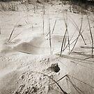 Sawtell Beach by Duncan Waldron