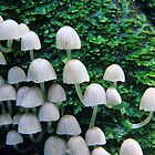 Mushrooms by Travis Easton