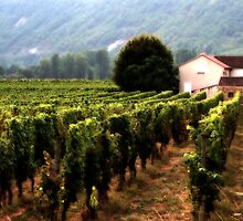 Vineyards at Duravel, France by Mibby