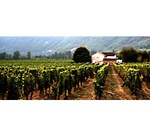 Vineyards at Duravel, France Photographic Print