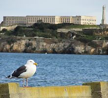Seagull by the Bay by JonHanson