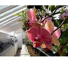 Tropical glasshouse Photographic Print