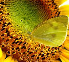 Nectar Paradise by Bobby McLeod