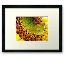 Nectar Paradise Framed Print