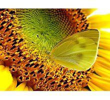 Nectar Paradise Photographic Print