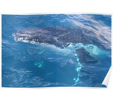 Whale through water Poster