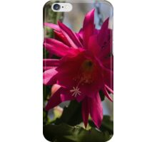 Vivacious Christmas Cactus Bloom iPhone Case/Skin