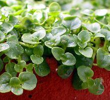 Seedlings! by Mibby