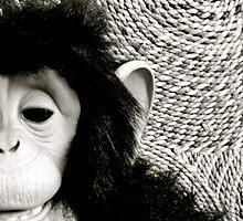 Shades Of Monkey Grey by Ashleigh Robb