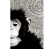 Shades Of Monkey Grey Photographic Print