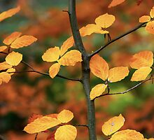 Autumn Branch by Paul Morley