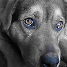 It's a Dog's Life - Selective Colouring by Debbie Black