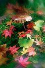 Ginko, Maple, Fungi. by Ern Mainka