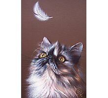 Cat & feather Photographic Print